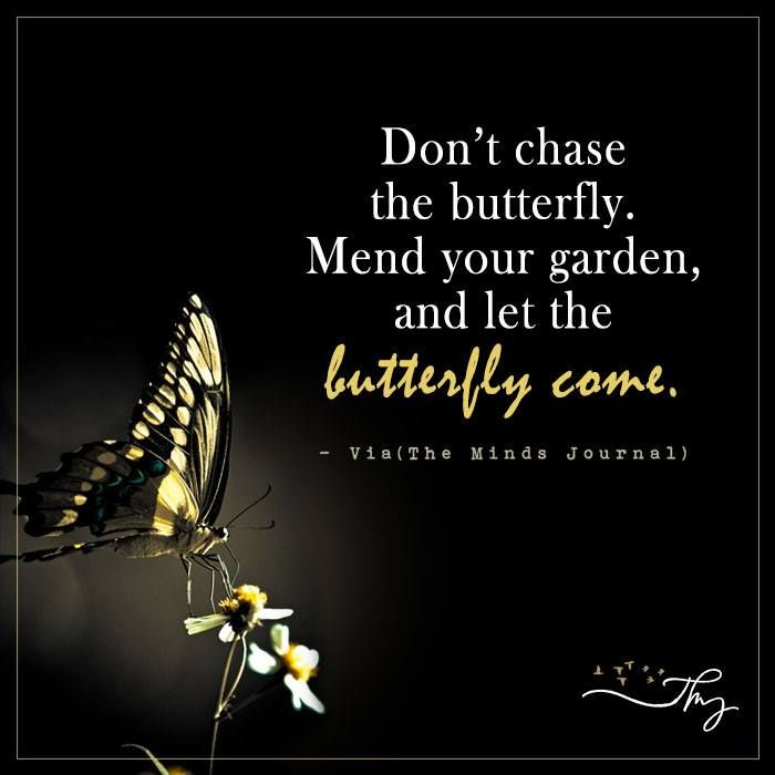 Quotes About Wisdom Don T Chase The Butterfly The Minds Journal Quotess Bringing You The Best Creative Stories From Around The World