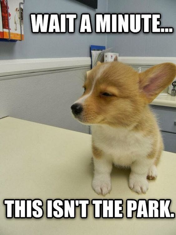 Funny Memes For Kids No Swearing : Best funny quotes animal jokes and memes
