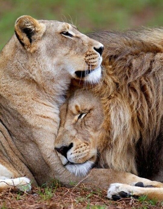 King And Queen Love Quotes Impressive Long Distance Love Quotes  King & Queen Status❤  Quotess