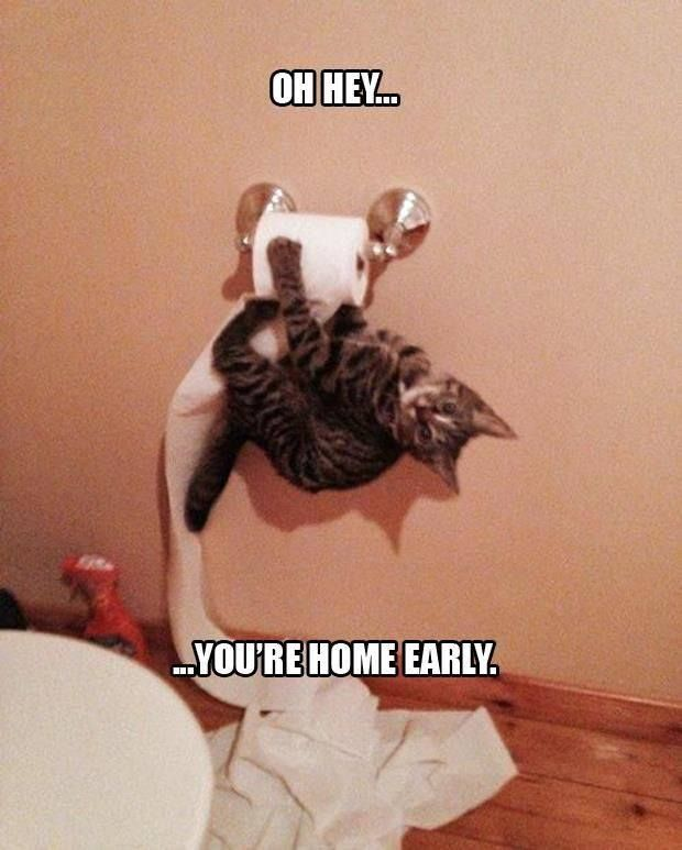 best funny quotes top funniest animal pics captions