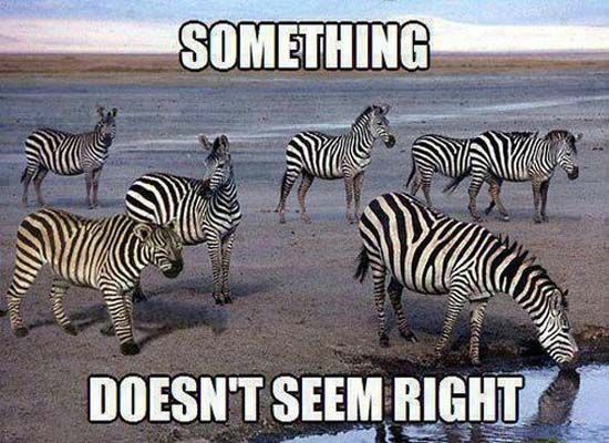 Funniest Animal Memes In The World : Internet memes that have won our hearts