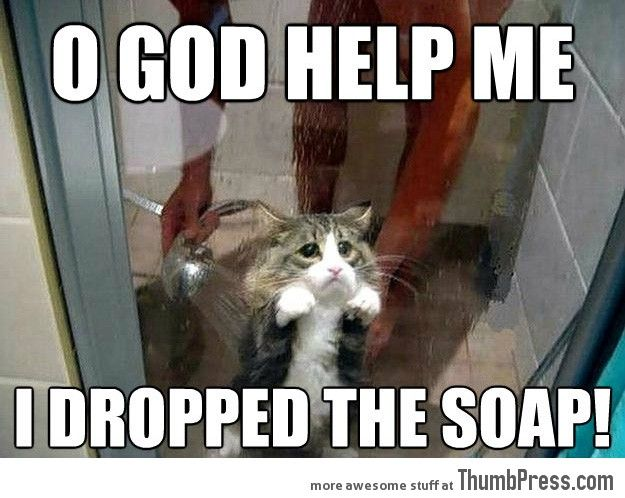 a7a2cab47b08e49bd7e6e4035f439d88 sad kitty sad cat best funny quotes most funny animal memes and humor pics