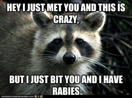 d0cea5f31a65b6d19c6a2a2eab329ff6 funny animal memes hilarious animals best funny quotes most funny animal memes and humor pics