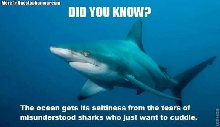 Best Funny Quotes Top 28 Shark Week Memes July 23 2018 We Celebrate Sports Week Musical Nig Quotess Bringing You The Best Creative Stories From Around The World